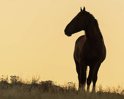 Silhouette by Mary Hone
