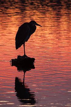 Matt Dobson - Silhouette of a Heron