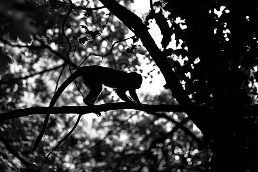 Silhouette of a Monkey by Baptiste De Izarra