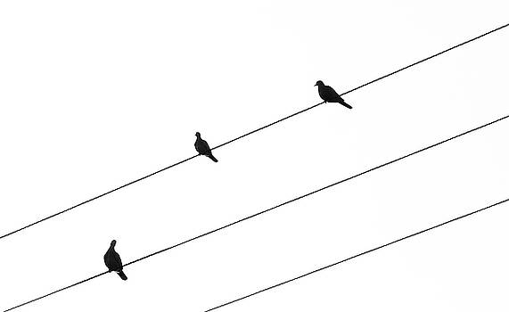 Silhouette of birds sitting on electric cables by Michalakis Ppalis