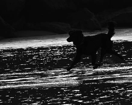 Silhouette of Dog Running in Water by Richard Hinds
