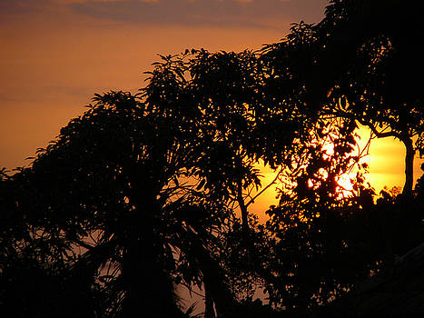 Silhouette of Trees at Sunset - 2 by Sandeep Gangadharan