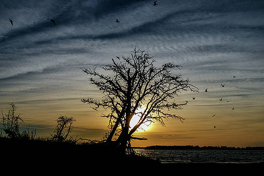 Silhouette Sunset by Doug Long
