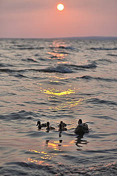 Silhouetted Ducks by Andrew Miles