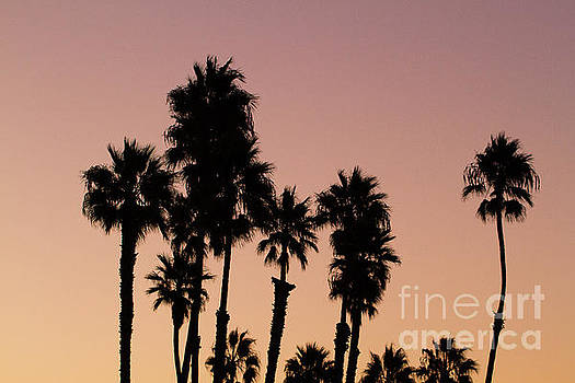 Silhouetted Palm Trees by Denise Lilly