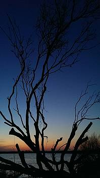 Silhouetted Twilight by Liza Eckardt