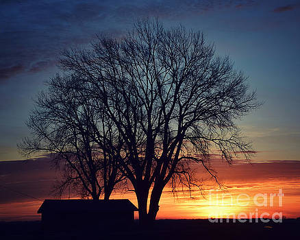 Silhouettes At Dawn by Kathy M Krause
