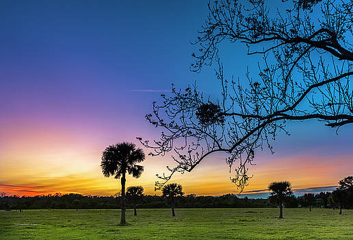 Silhouettes at Sunset by Louise Hill