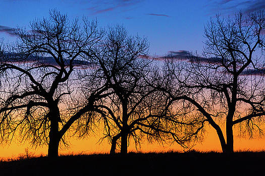 Silhouettes Of A Spring Sunrise by John De Bord