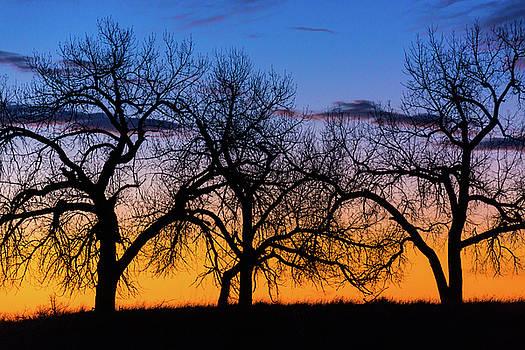John De Bord - Silhouettes Of A Spring Sunrise