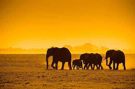 Silhouettes Of Elephants by Konstantin Kalishko
