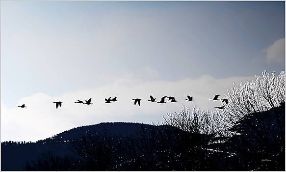 Silhouettes of Wild Geese in Black Against White Blue Sky by Gretchen Wrede