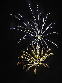 Paula Porterfield-Izzo - Silver and Gold Fireworks
