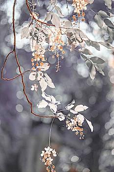 Jenny Rainbow - Silver Beauty.  Nature in Alien Skin