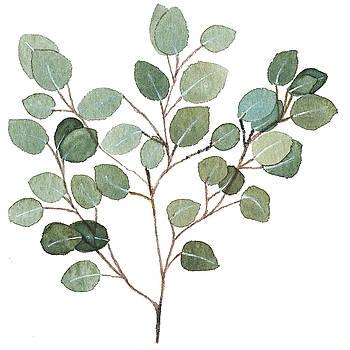 Silver Dollar Eucalyptus by Garima Srivastava