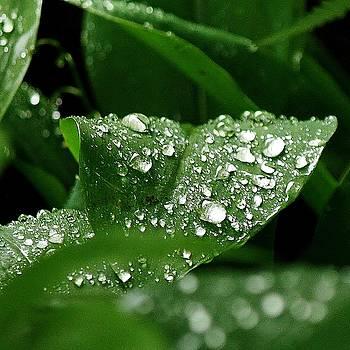 Silver Drops of Spring by Al Fritz