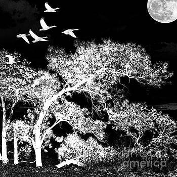 Silver Nights by LemonArt Photography