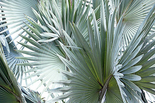 Debbie Oppermann - Silver Palm Leaf Abstract