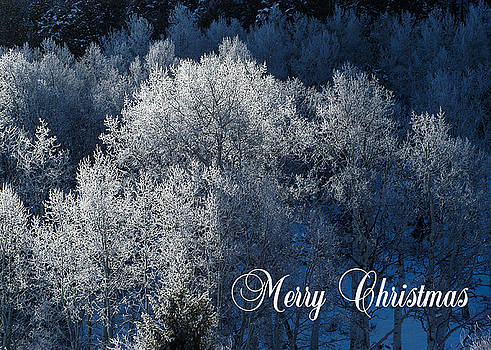 Silver Trees Christmas Card by Roy Kastning
