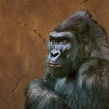 Nikolyn McDonald - Silverback Stare - Gorilla