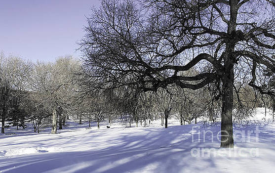 Onedayoneimage Photography - Silvery Blue Winter