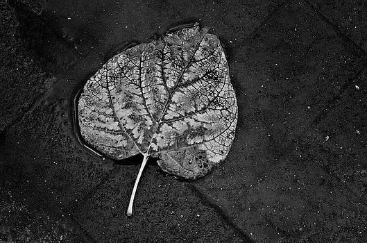 Dave Gordon - Silvery Leaf I