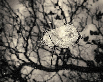 David Gordon - Silvery Leaf II Toned