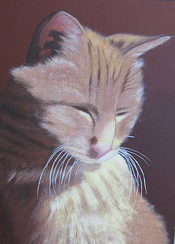 Simba, best cat. by Lorraine Bradford