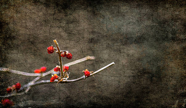 Simple Beauty by Garett Gabriel