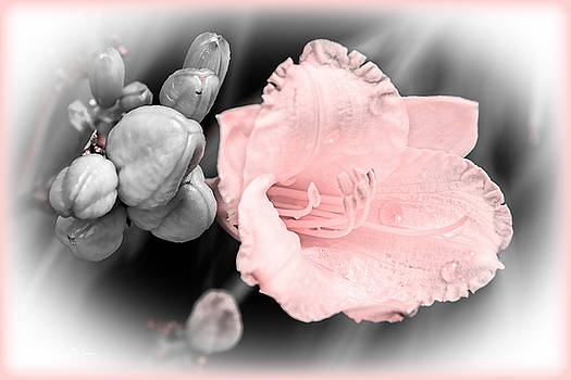Barry Jones - Simple Beauty - Lily - Floral