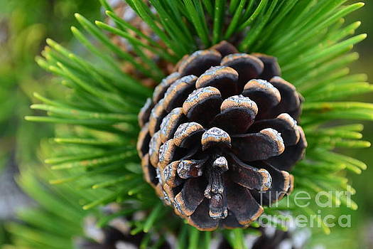 Simple cone by Sonya Staneva