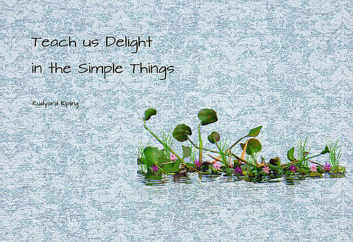 Simple Things by Rosalie Scanlon