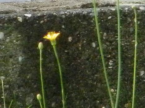 Simple Weed by Paula Giampola