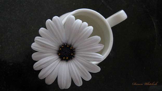 Simple White Daisy by Doreen Whitelock