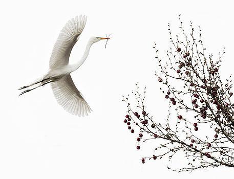 Simplicity by Melinda Hughes-Berland