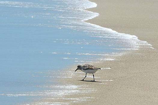 Simplicity of A Beach's Beauty by Sandi OReilly