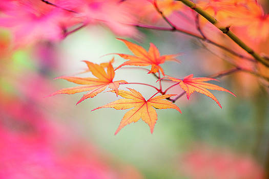 Simply Fall by Jacky Parker