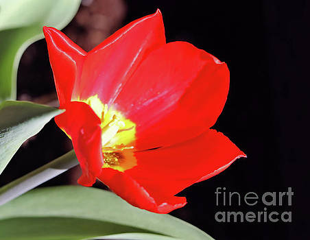Simply Spring by Victor K