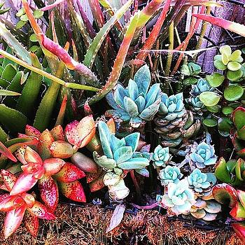 Simply Succulents by Angela Holmes