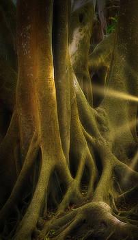 Sinews by Richard Goldman
