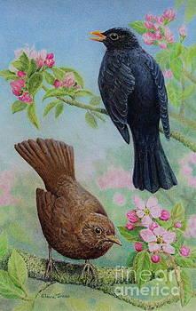 Sing to Me Mister Blackbird by Elaine Jones