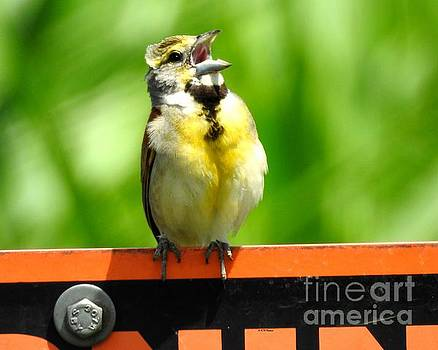 Singing Dickcissel by Kathy M Krause