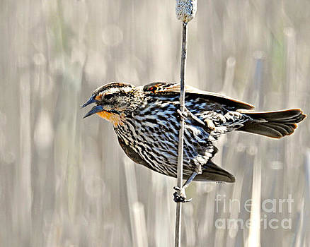 Singing In The Breeze by Kathy M Krause