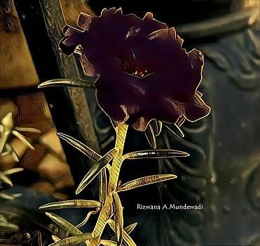 Rizwana Mundewadi - Single Black Beauty