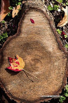 Single Fall Leaf by Dawn Wayand