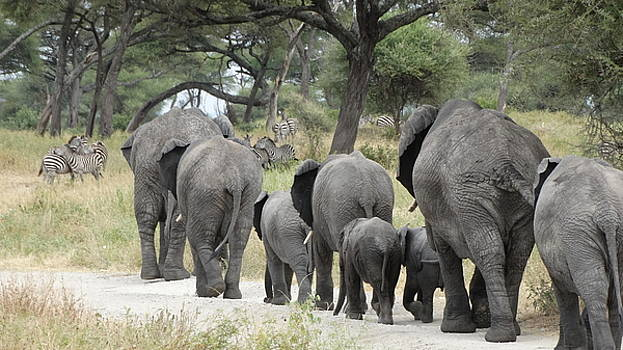 Single File by Sandra Durning