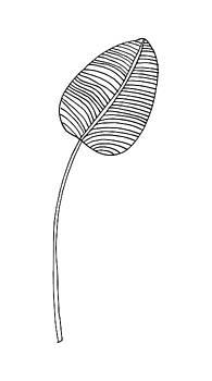 Single Leaf Line Drawing by Cortney Herron