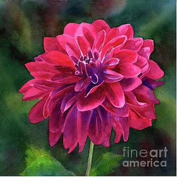 Single Magenta Dahlia Blossom dark background by Sharon Freeman