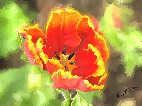 Single open tulip blossom by Rusty R Smith
