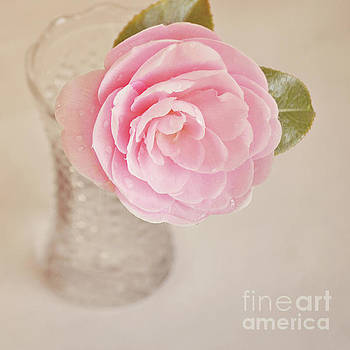 Single pink Camelia flower in clear vase by Lyn Randle
